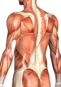 intramuscular_stimulation_inPage